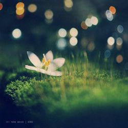 of magic and flowers by thresca