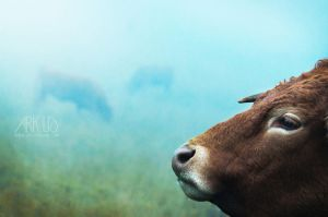 Cows by Arkus83