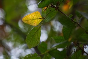 Signs of Autumn by BlackRoomPhoto