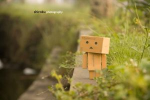 Danbo's walking around by microshiroku