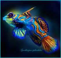 Mandarin Goby by doormouse1960