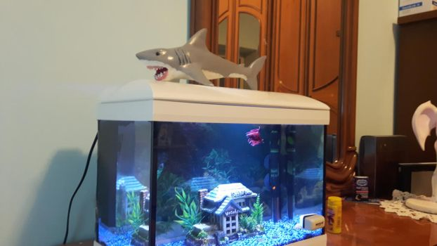 Jaws sculpture and Fighting fish by GiuseppeIlSanto