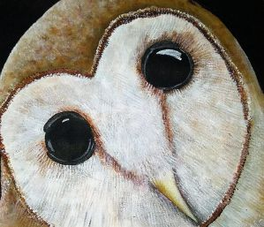 edited barn owl by rainbow-falls