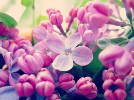 Lilac by Marianna9