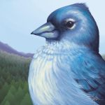 Tenerife Blue Chaffinch by CaymArtworks