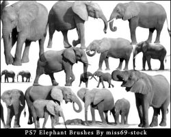 Elephant Brushes by miss69-stock