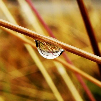 Water droplet off the gras by Tsukiko-chan09