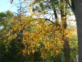 Golden Leaves by Michies-Photographyy