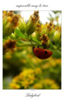 Ladybird - impossible? by werol