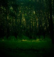Light in the forest by Anna-Belash