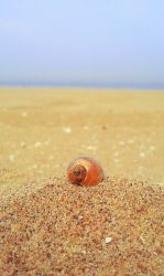 Little shell on the beach by eline-w