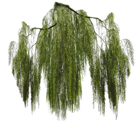 Weeping willow branch cut-out by Simbores