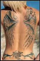 wings by johnfuller