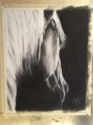 Horse charcoal by fangy89