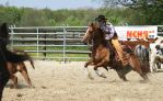 western horse sport cutting 02 by Nexu4
