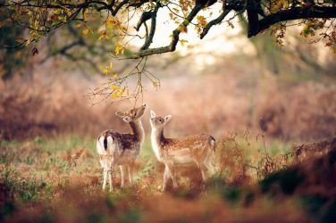25-best-wildlife-photography by alexandesnyder