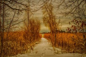 A path.. by qwstarplayer