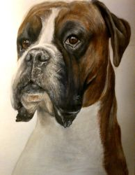 Dog drawing by KirstyPartridgeART