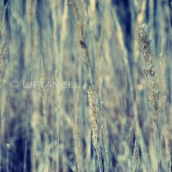Idle grain by liftangel