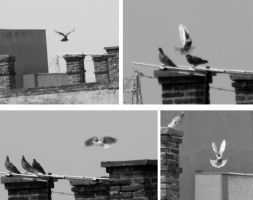 Birds on the rooftop by Yudet