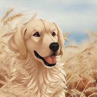 Golden Retriever by Mr-SKID