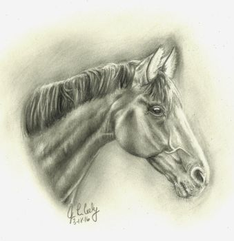 Horse by J-Cody