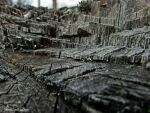 Tree Trunk Cuts by Soll-DenneGallery