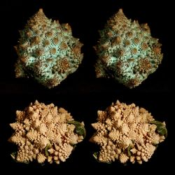 bronze and freeze dried Romanesco by markdow