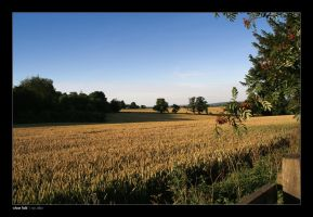 wheat field by Raymate