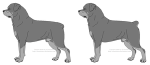 Free Rottweiler Lines- Male With Docked Tail by xLunastarx