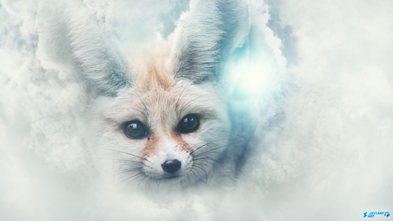 Fennec Fox by Furi0us14