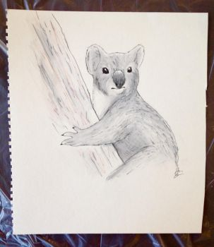 Koala (Waterwash) by Juststarz63
