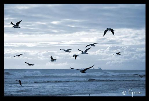 freedom by fipas