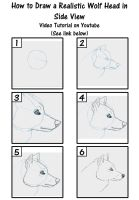 How to draw a Realistic Wolf Side View- Tutorial by SavannaW