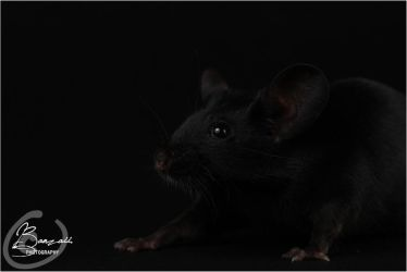 Van Raaij's Umber - Show Mouse by BanzZaii