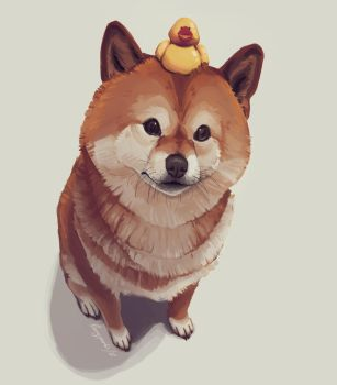 Doge by berryparts
