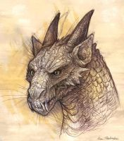 Dragon Head Sketch by KatePfeilschiefter