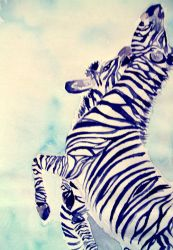 Zebras by obscene-bunny