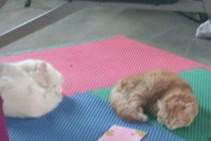 Toby and Ginny taking a long nap togther by Agranholm