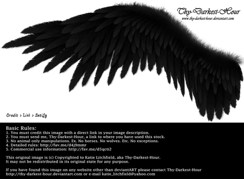 Winged Perfection - Black by Thy-Darkest-Hour