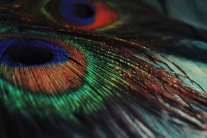 Peacock Feathers by ruksi86