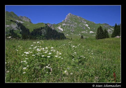 Alpine meadow by SmoothEyes