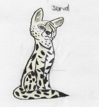 Servals Rock: by Paws-for-a-Moment