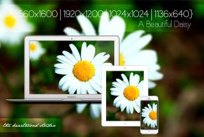 A Beautiful Daisy HD Wallpaper by TheHeartwoodStudio