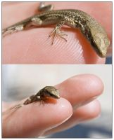 Finger Gecko by Mantis-nk