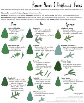 Science Fact Friday: ID Your Christmas Tree by Alithographica