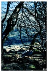 Branches and Duckies by neeta