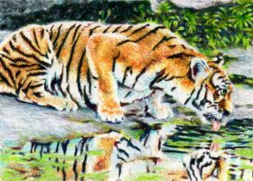 1.16: Tigers Lambent by theperian