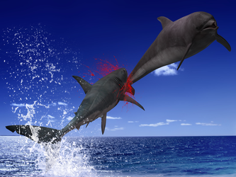 Cruel sea: great white shark attacks dolphin by Pyro-raptor