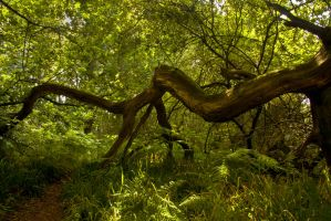 Northumberland Woodlands 2 by newcastlemale
